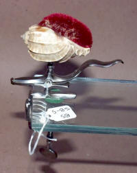 Antique Polished Steel Figural Sewing Clamp w/ Shell Pincushion