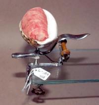 Antique Figural Sewing Clamp w/ Sea Shell Pincushion W/ Thread Winder